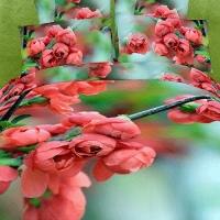 """Постельное белье 3D цветы """" Butoni"""" сатин"""